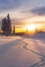 Preview iPhone wallpaper Russia, winter, snow, trees, sunset