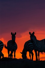 Preview iPhone wallpaper Savannah, Africa, zebras at sunset