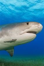 Preview iPhone wallpaper Shark, underwater, sea