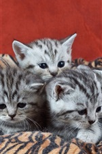 Preview iPhone wallpaper Six kittens, cubs
