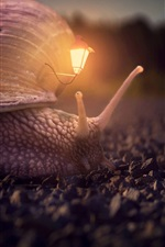 Snail, house, lamp, creative picture