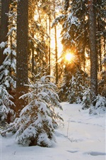 Preview iPhone wallpaper Snow, trees, sunshine, winter