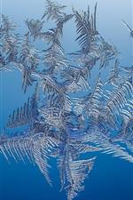iPhone fondos de pantalla Copo de nieve, hielo, fondo azul