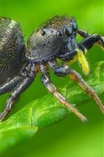 미리보기 iPhone 배경 화면 거미, 곤충, 녹색 식물