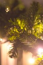 Spruce twigs, light, glare