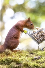 Preview iPhone wallpaper Squirrel, peanut, shopping cart, funny animal