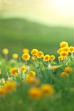 Preview iPhone wallpaper Summer, yellow flowers, green grass, bokeh