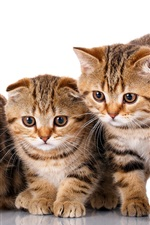 Preview iPhone wallpaper Three cute kittens, white background