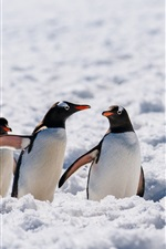 Preview iPhone wallpaper Three penguins, wildlife, snow, Antarctica