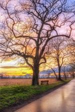 미리보기 iPhone 배경 화면 나무 들판, 도로, 봄, 황혼