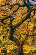 iPhone fondos de pantalla Árboles, musgo, ramitas, otoño