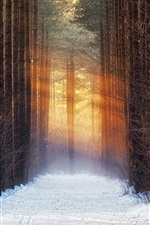 iPhone壁紙のプレビュー 木々、雪、道、太陽の光、冬