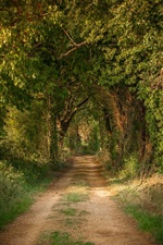 Preview iPhone wallpaper Trees, tunnel, road