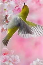 iPhone обои Две птицы, розовая сакура, цветы, весна
