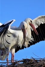 Preview iPhone wallpaper Two birds, storks, play game