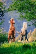 Preview iPhone wallpaper Two horses, grass, trees, green