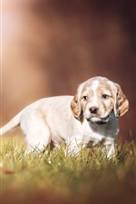 Preview iPhone wallpaper Two puppies, doggie, grass, bokeh