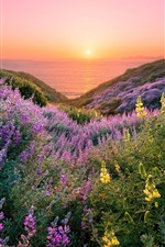 Preview iPhone wallpaper USA, San Francisco, beautiful flowers, sea, sunset