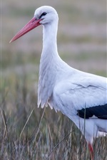 Preview iPhone wallpaper White and black feathers bird, stork, grass