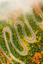 Winding road, trees, fog, morning, autumn, from top view