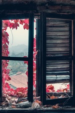 Preview iPhone wallpaper Window, red leaves, dust