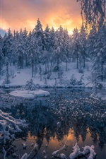 Winter, snow, forest, trees, Ringerike, Norway