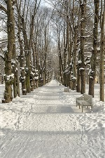 Preview iPhone wallpaper Winter, snow, trees, path, park