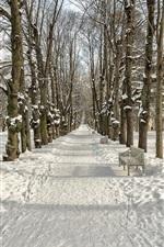 Winter, snow, trees, path, park