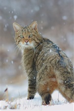 Preview iPhone wallpaper Winter, snow, wild cat look back