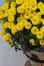 Yellow chrysanthemum, bouquet, flowers
