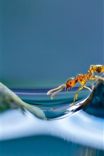 Preview iPhone wallpaper Ant, water, island