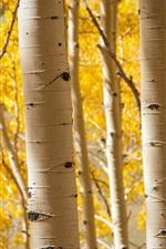 Autumn, grove