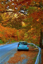 Preview iPhone wallpaper Autumn, trees, road, car