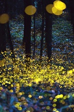 Beautiful forest, glare circles, night