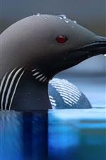 Preview iPhone wallpaper Black bird, head, beak, water, water drops