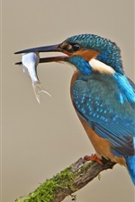 Preview iPhone wallpaper Blue feather kingfisher, catch fish