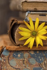 Preview iPhone wallpaper Books, yellow flower