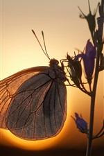 Butterfly, flowers, backlight