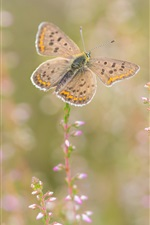 Preview iPhone wallpaper Butterfly, wildflowers