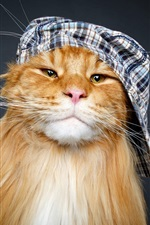 Preview iPhone wallpaper Cat, hat, funny animal