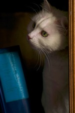 Preview iPhone wallpaper Cat in bookcase