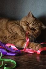 Preview iPhone wallpaper Cat play ribbon