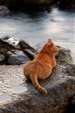 Preview iPhone wallpaper Cat, rest, stones, sea