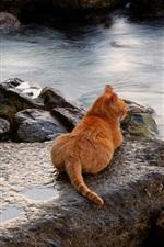 Cat, rest, stones, sea