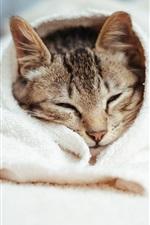 Preview iPhone wallpaper Cat sleep, woollen blanket