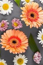 Preview iPhone wallpaper Colorful flowers, gerbera, chamomile, white, pink, orange