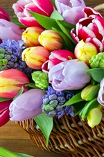 Colorful flowers, hyacinths, tulips, basket