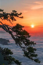 Preview iPhone wallpaper Crimea, Russia, pine tree, cliff, dawn, sunrise