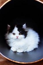 Preview iPhone wallpaper Cute fluffy kitten