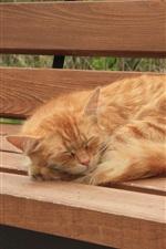 Preview iPhone wallpaper Cute kitten sleep on bench